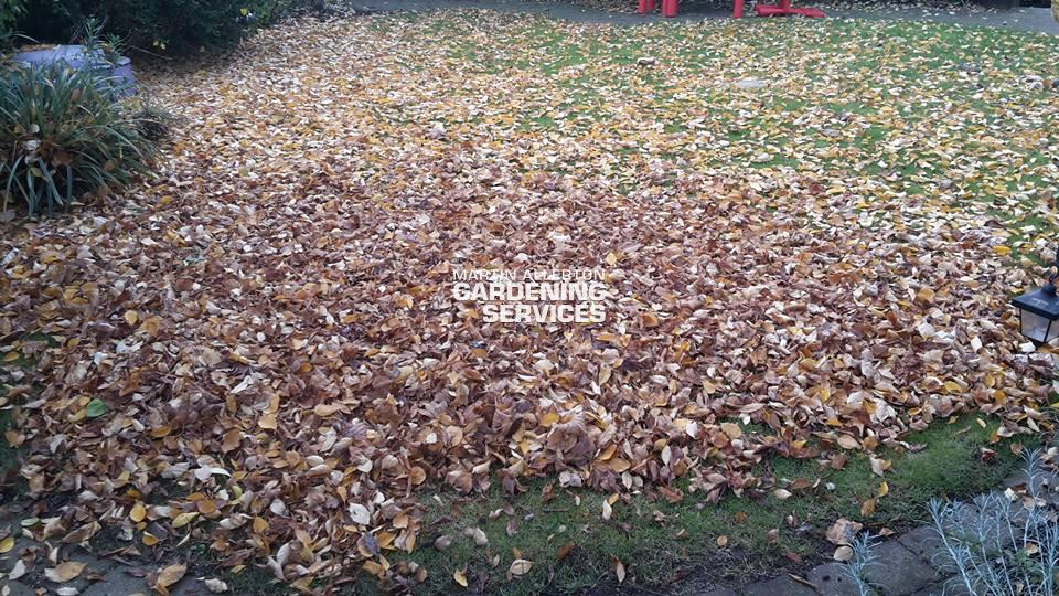 Stone leaves clearance -before