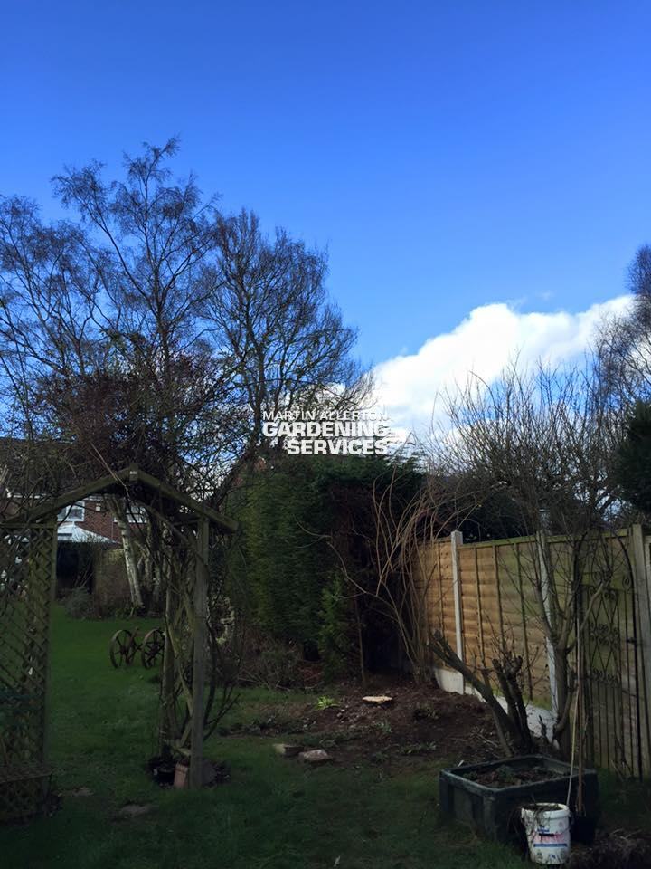 Kingstone conifer tree removal - after