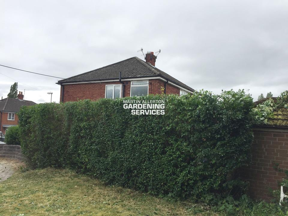 Stoke-on-Trent garden hedge reduction - after
