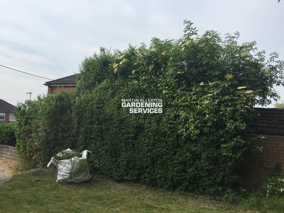 Stoke-on-Trent garden hedge reduction - before