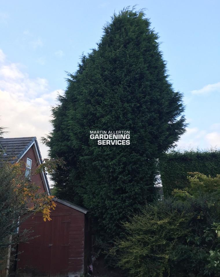 Stoke conifer reduction - before