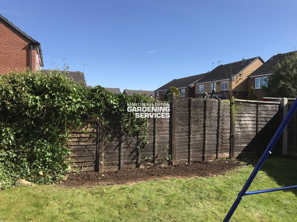 Stone laurel hedge removal - after