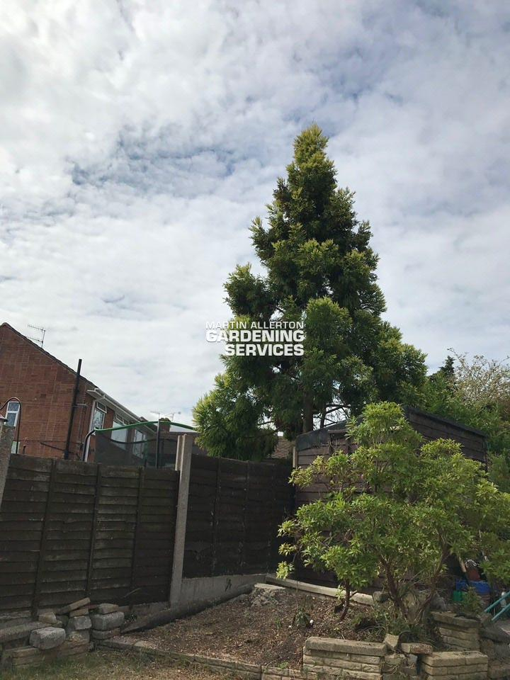Newcastle-under-Lyme 25ft conifer tree removal - after