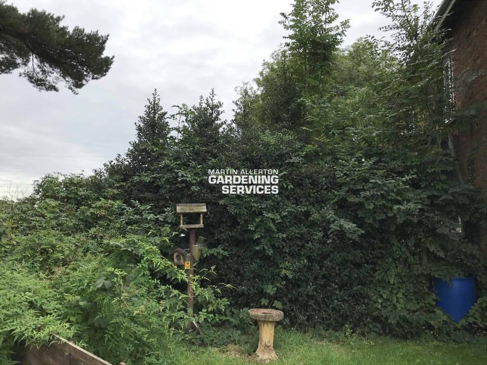 Swynnerton hedge reduction - before