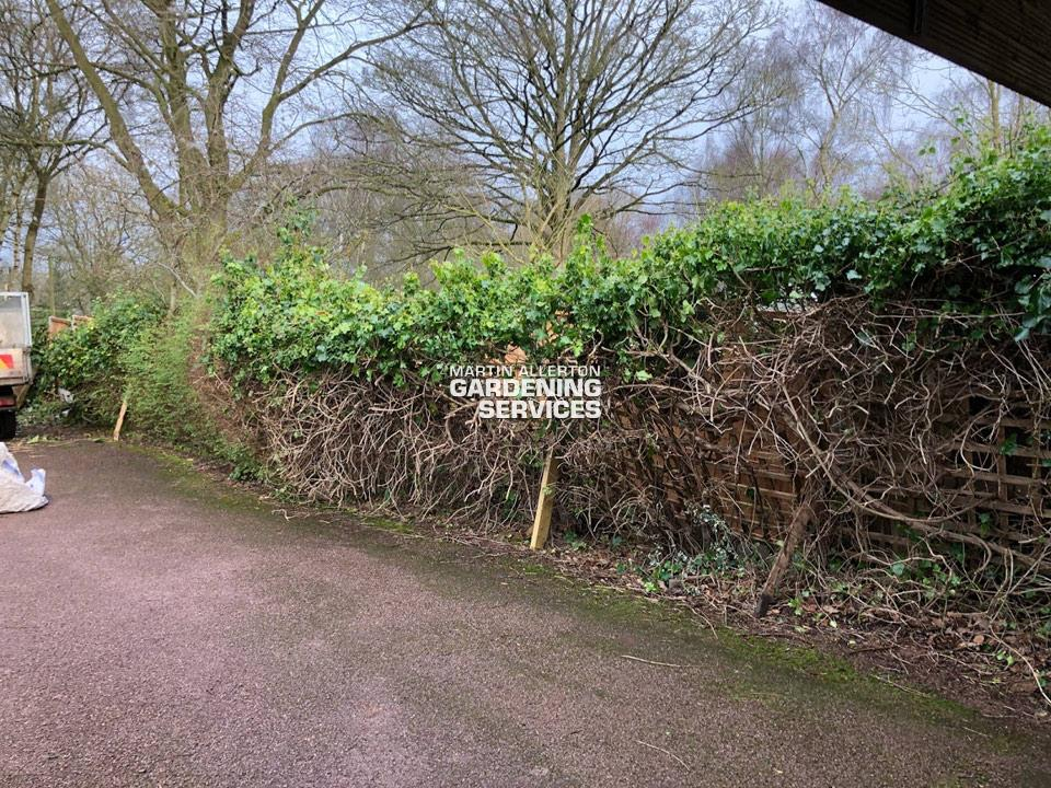 Stafford hedge removal - before