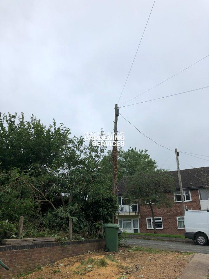 Barlaston tree removal - after