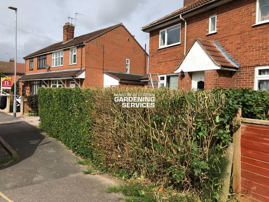 Barlaston hedge reduction - after