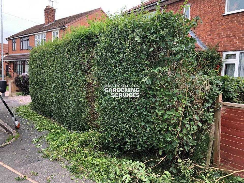 Barlaston hedge reduction - before