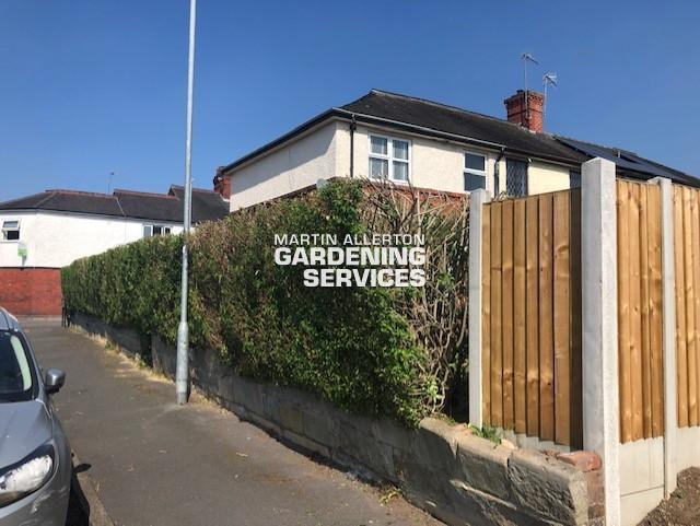 Trentham privet hedge reduction - after